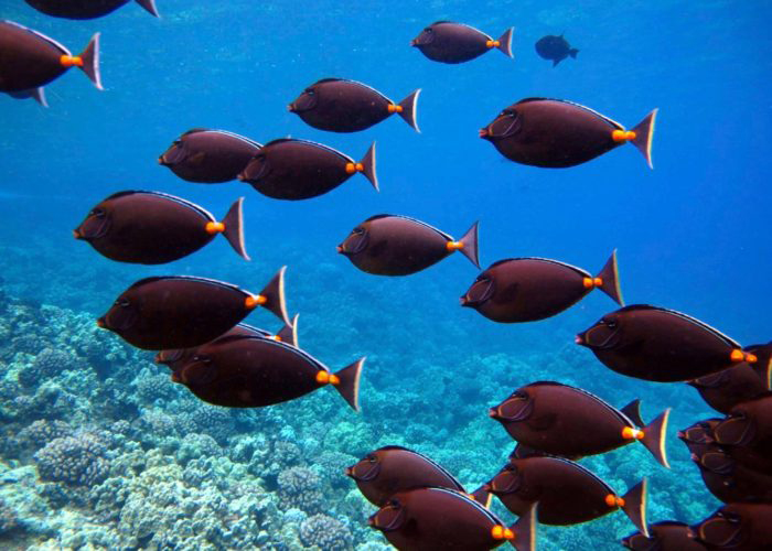 Schools of reef fish