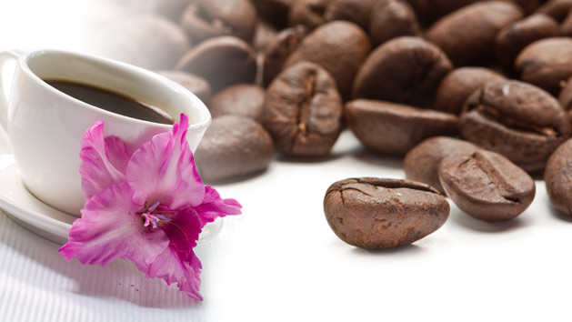 Learn all about coffee farming