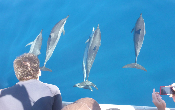 Dolphins out to play