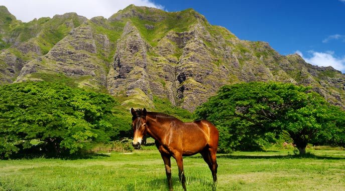 Kualoa Ranch Horseback Trails