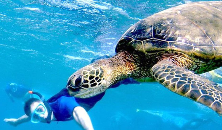 Swimming with Green Sea Turtle