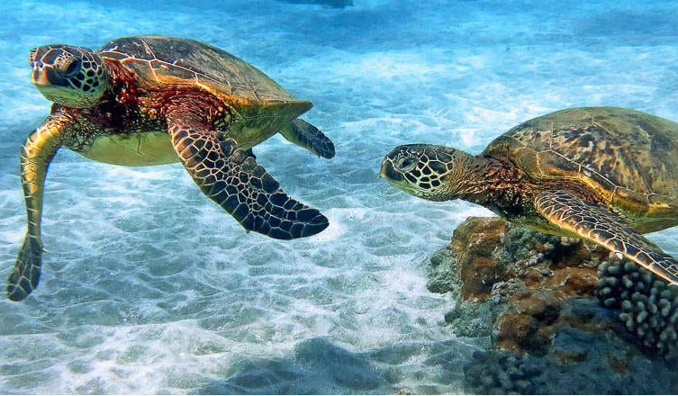 Green Sea Turtle Party